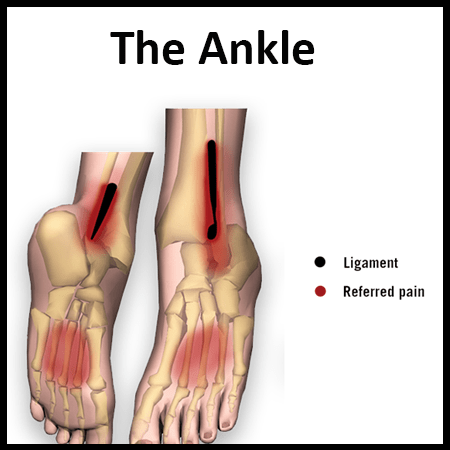 Module 5: The Ankle